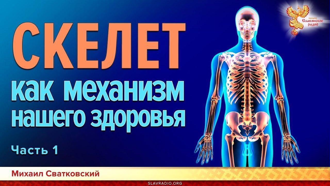 Скелет человека, зачем он нужен. Часть 1