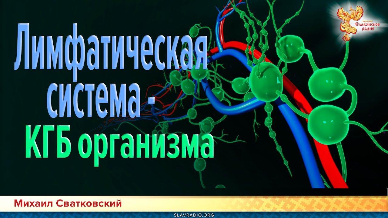 Лифматическая система - спецслужба организма