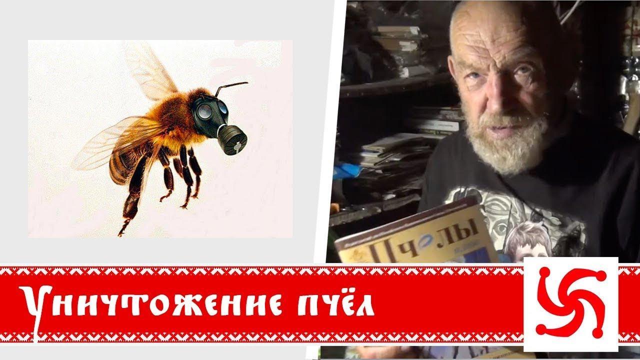 Как уничтожают пчел? Борис Володарский