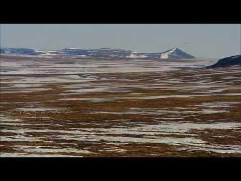 Дикая природа России - Арктика. Документальный фильм