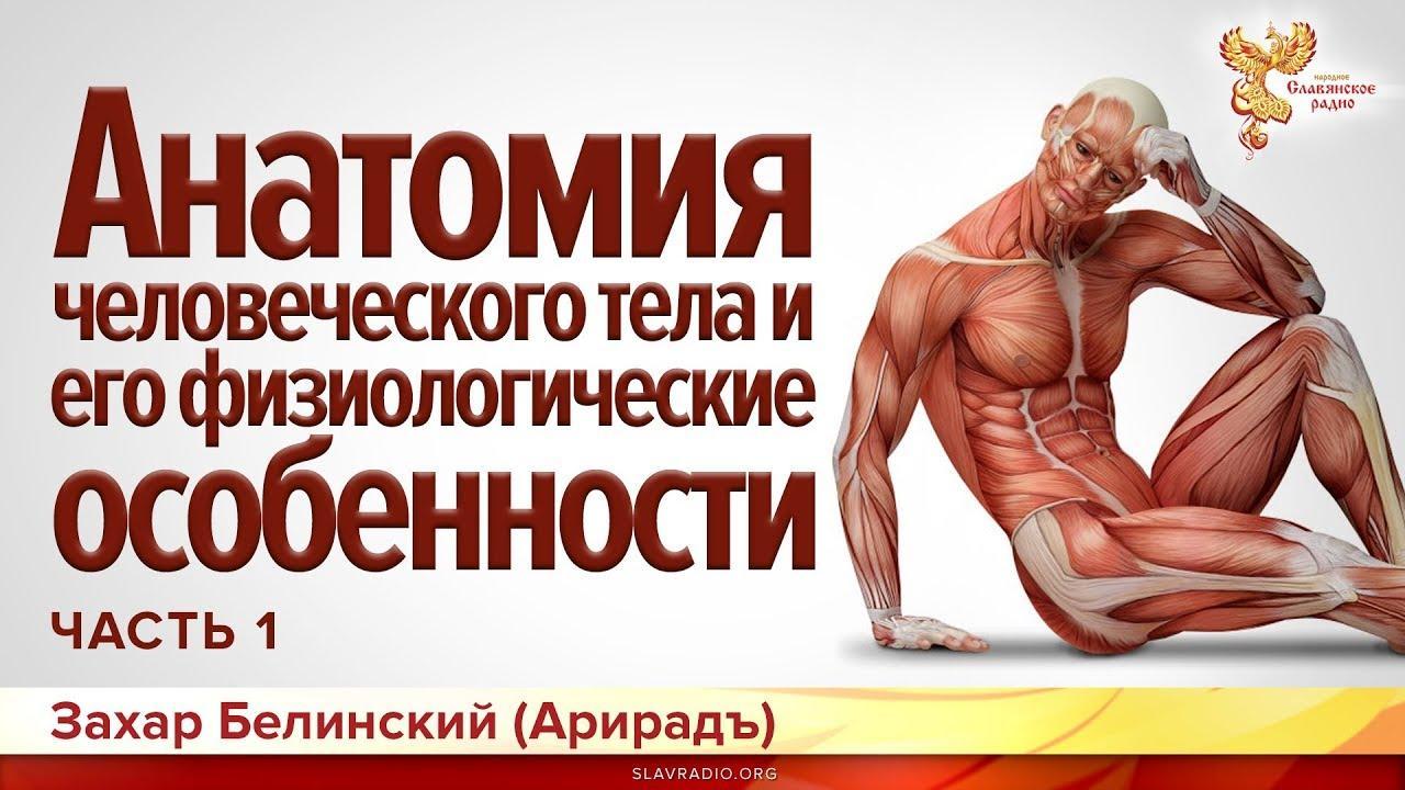 Строение человеческого тела. Часть 1